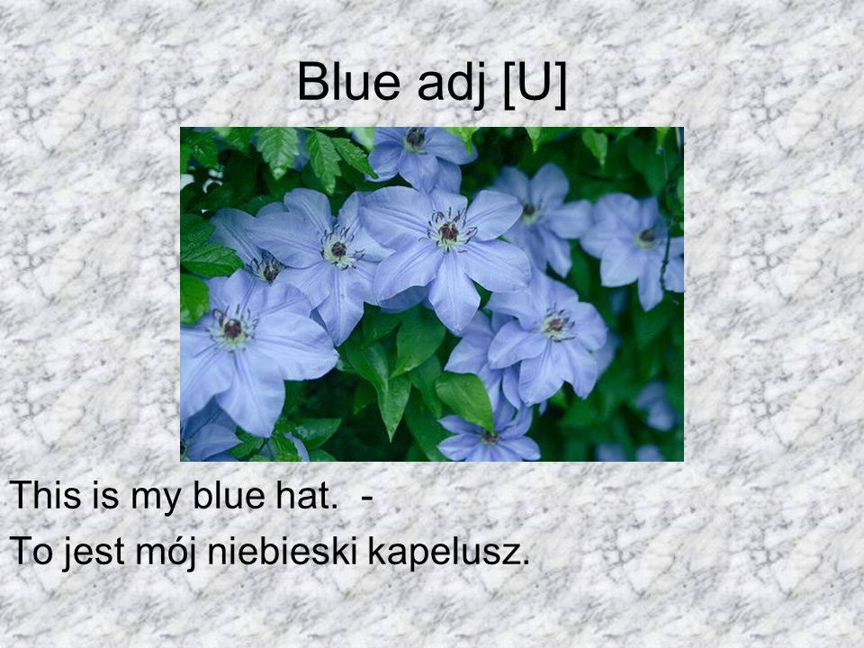 Blue adj [U] This is my blue hat. - To jest mój niebieski kapelusz.